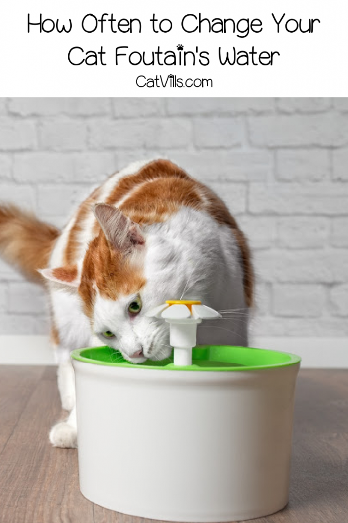 How often should you change the water in your cat fountain? Find out the answer, plus get tips on cleaning the most common types of fountains.