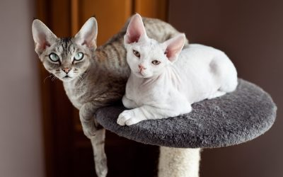 Best Cat Tree With a Ramp: Our Top 5 Picks with In-Depth Reviews