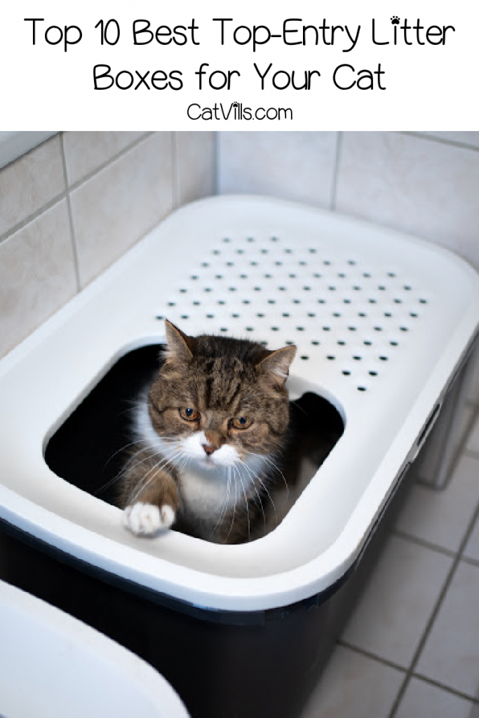 Looking for the best top entry litter boxes? Wondering if they're even a good fit for your cat? Check out our complete guide for all the answers!
