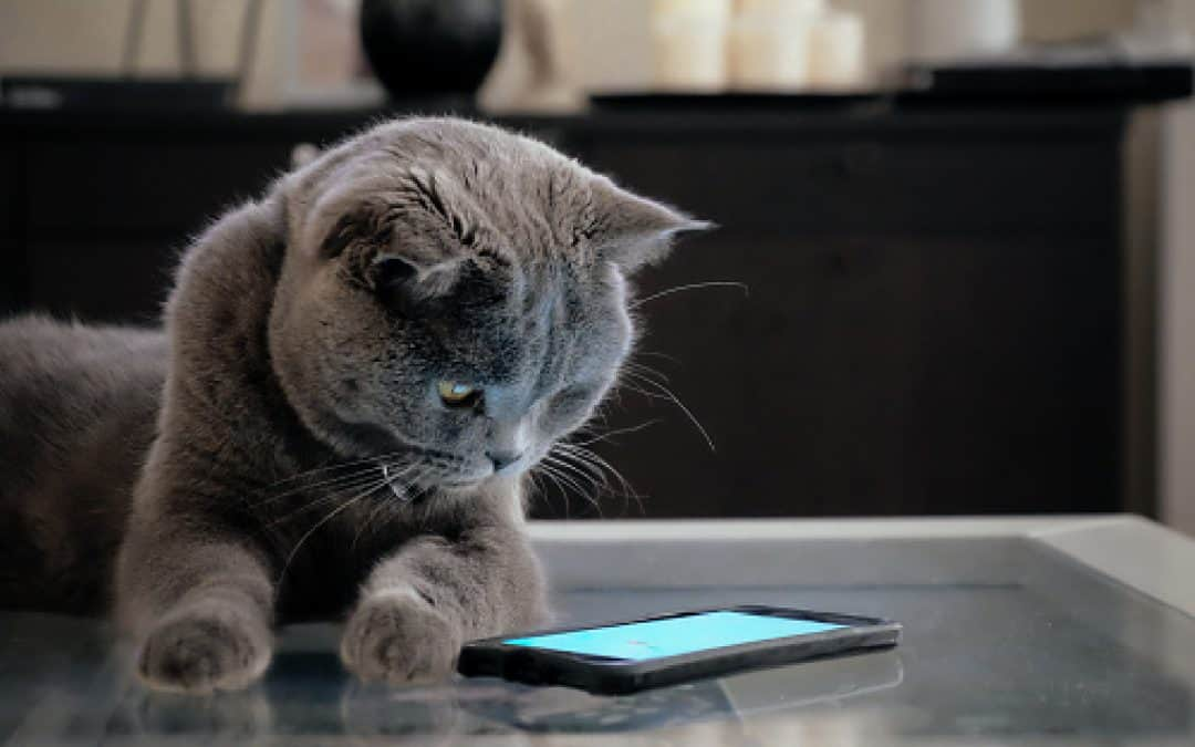Top 4 Best Cat Breed Identifier Apps to Try [with Complete Reviews]