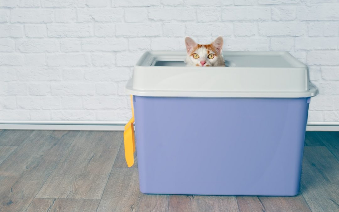 The 10 Best Cat Litter Box Liners (with Complete Reviews)