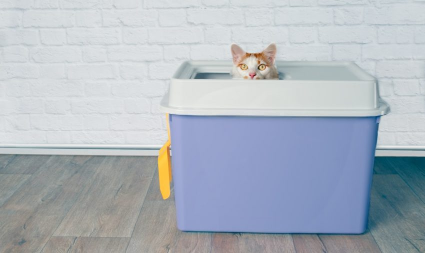 Looking for the best cat litter box liners for top entry boxes (or any other box, for that matter)? Check out our complete reviews of the top 10!