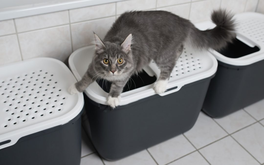 The  10 Best Top Entry Litter Boxes (With Complete Reviews)