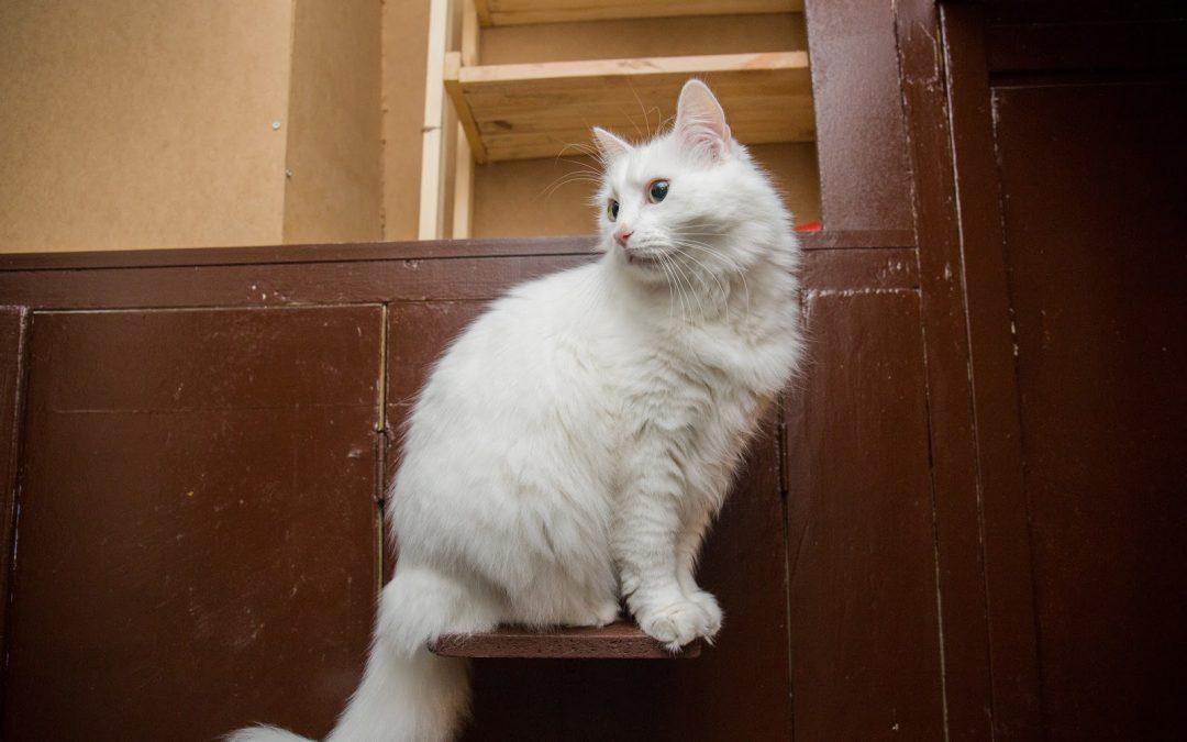 100 Breathtaking White Kitten Names