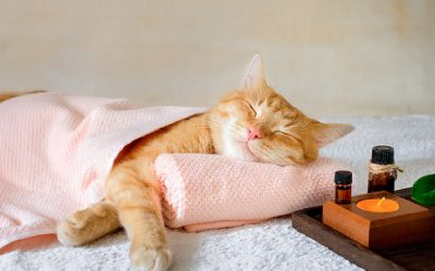 Why Do Your Cats Like to Sleep on Their Side? [In-Depth Answer to Cat Naptime Habits]