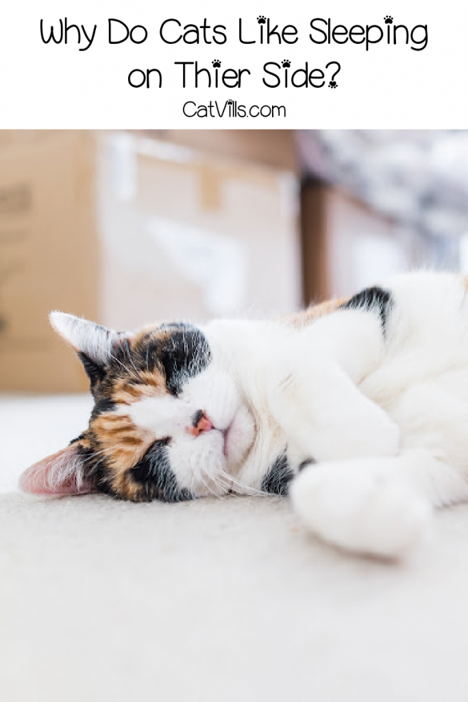What's the deal with cats sleeping on the side? How about other cute kitty naptime positions? Find out the answers in our complete guide!