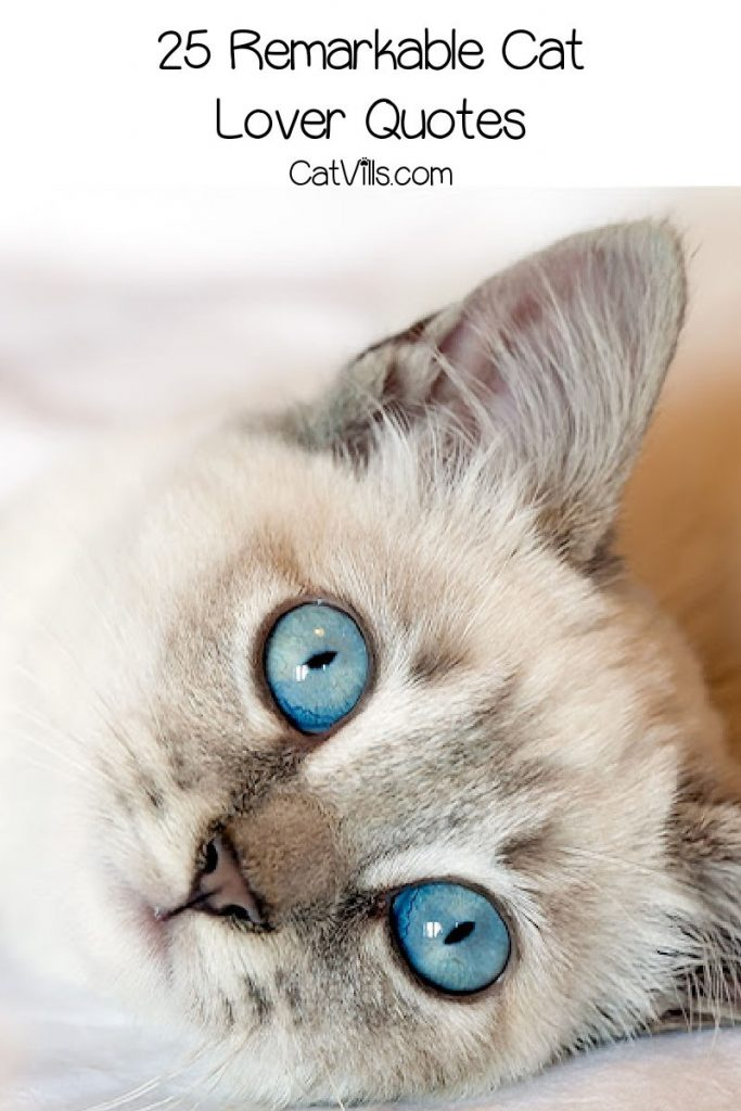 Beautiful blue-eyed cat with text that reads 25 remarkable cat-lover quotes