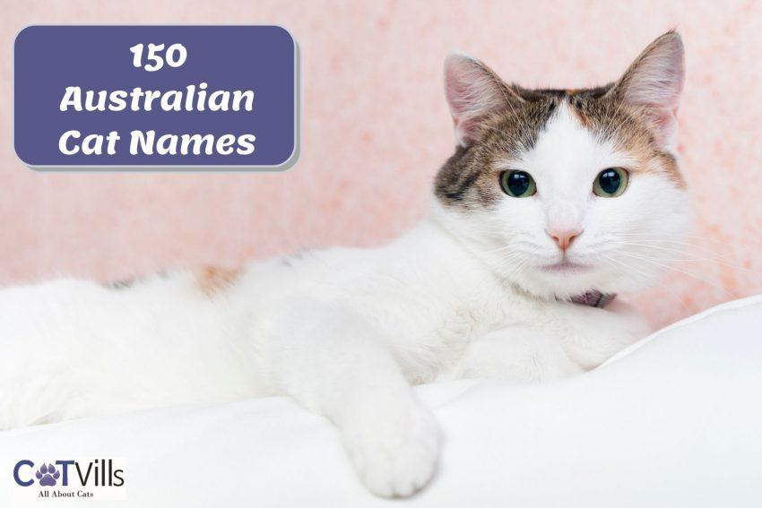 150 Australian Cat Names