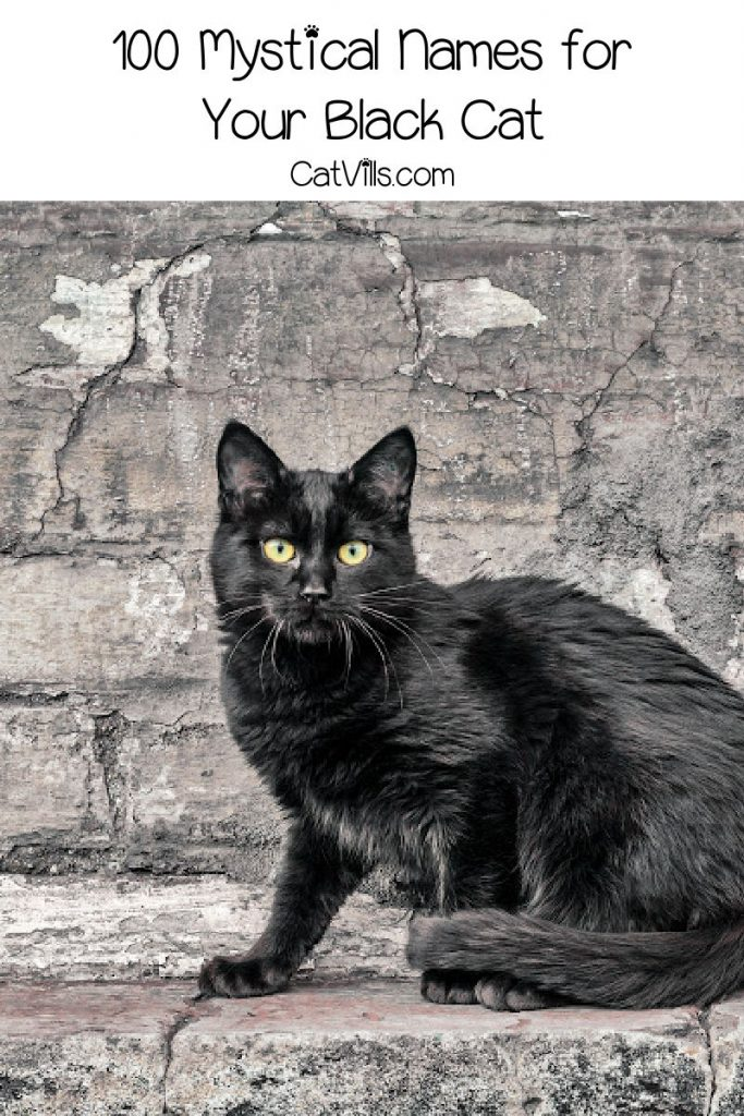 Image of black cat with text reading 100 mystical black cat names
