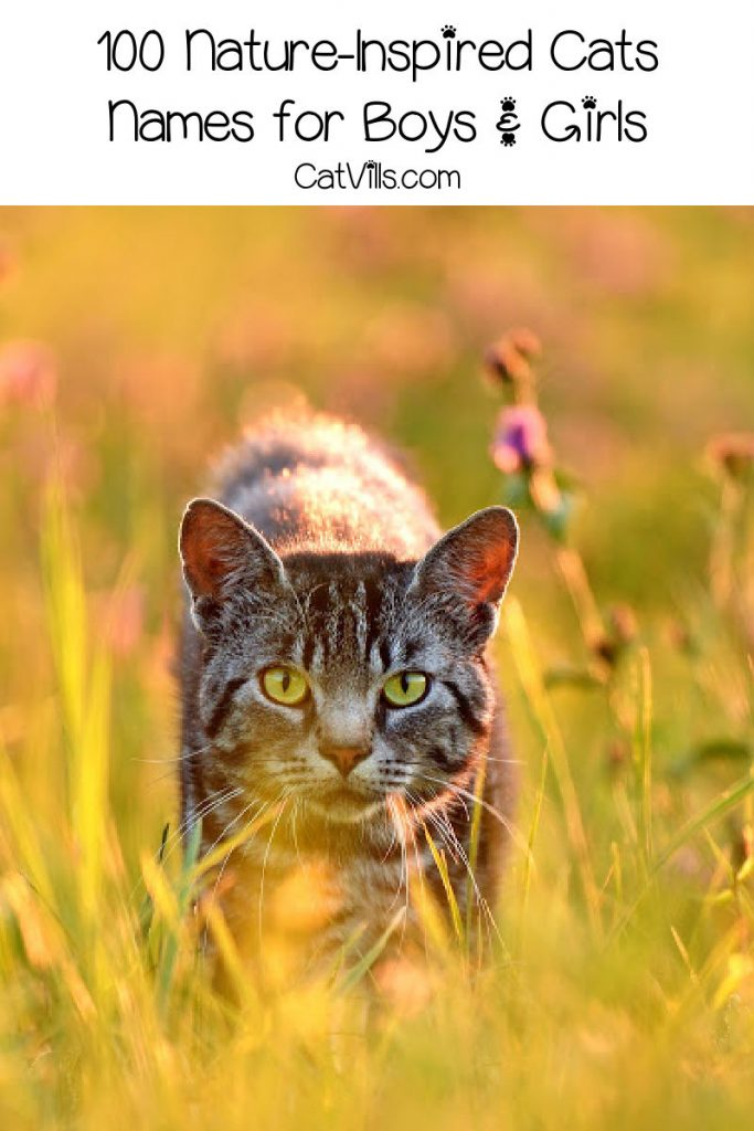 """A cat walking through tall grass in a field, with text that says """" 100 nature-inspired cat names for boys & girls."""""""