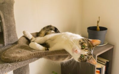 The 5 Best Cat Trees for Declawed Cats (With Complete Reviews)