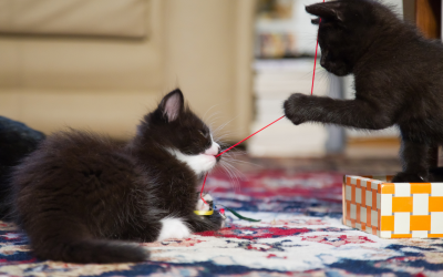 Brother and Sister Cat Names: 167 Adorable Ideas