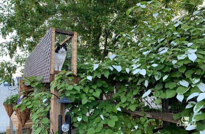 a black and white cat standing on her DIY cat tunnel