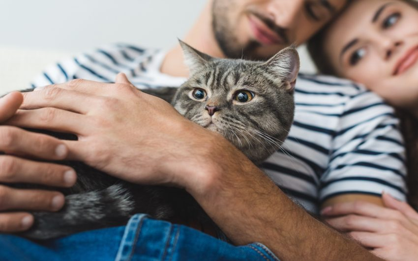 cat lover couple holding cat in hands and embracing