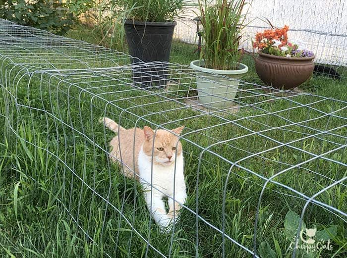 an orange cat relaxing on his DIY cat tunnel outdoor