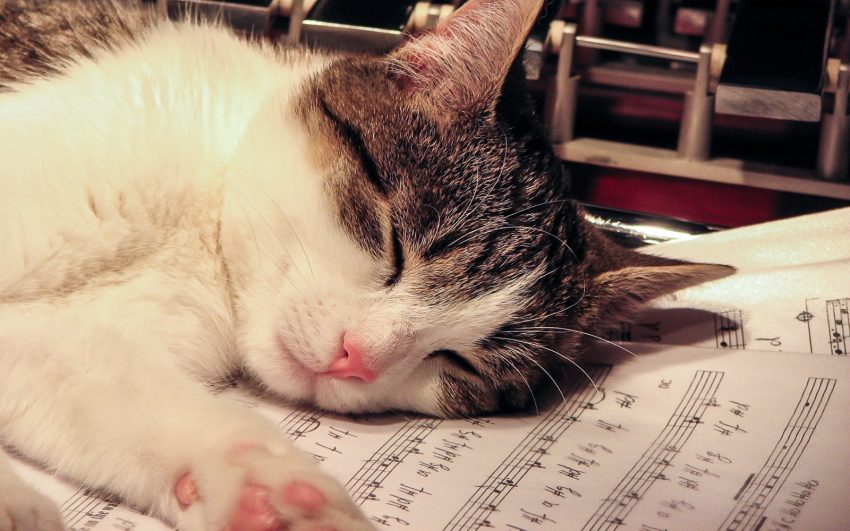 a cat sleeping on top of music notes and chords. this cat is perfect for a music related cat name