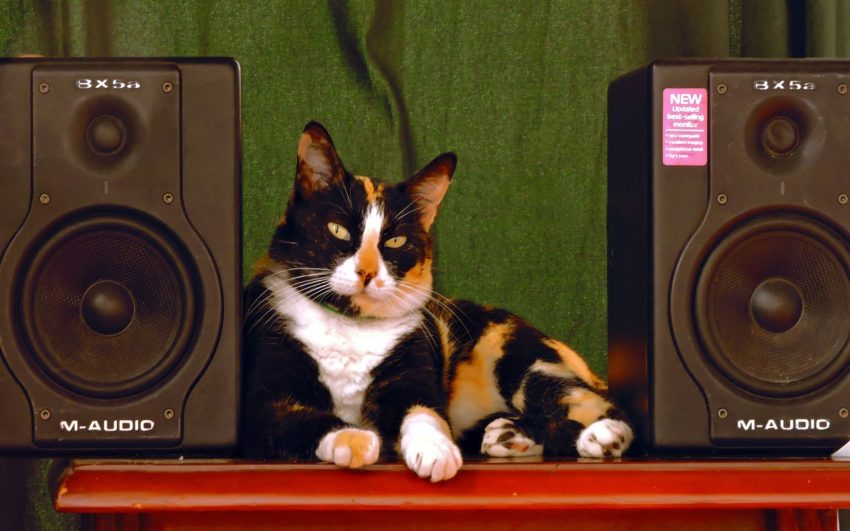 a poise cat with music related cat name sitting between two speakers