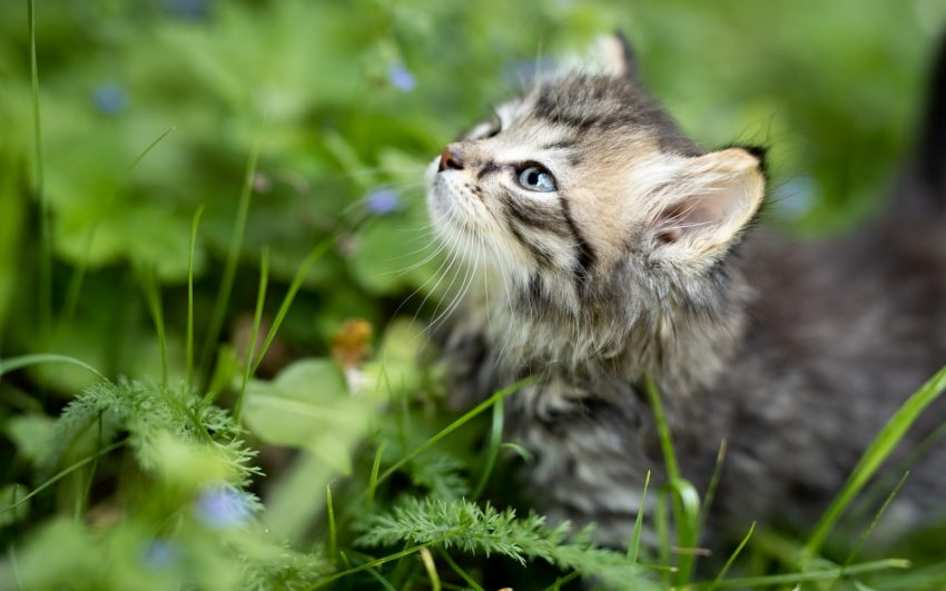 little tiger kitten walking in the forest surrounded by nature