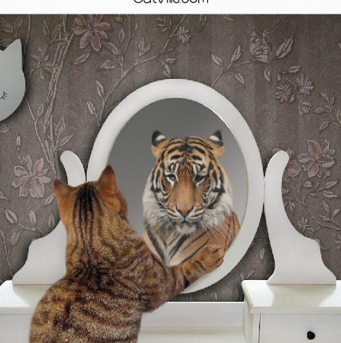 tiger cat looking in mirror