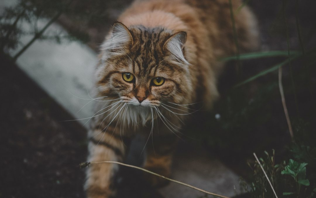 Why Does My Cat Eat Spider Webs? (Should You Worry?)