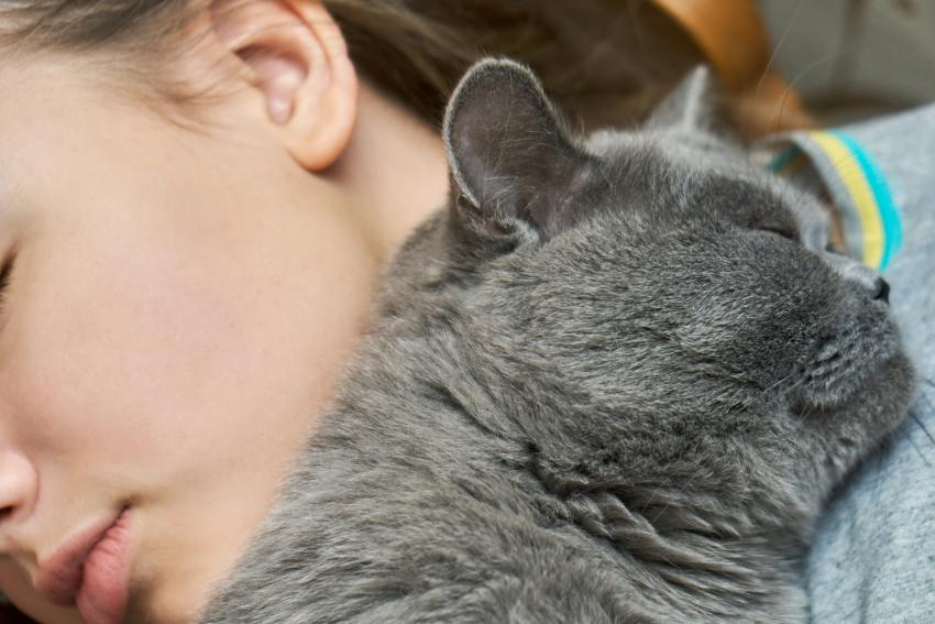 cat deeply sleeping beside her owner
