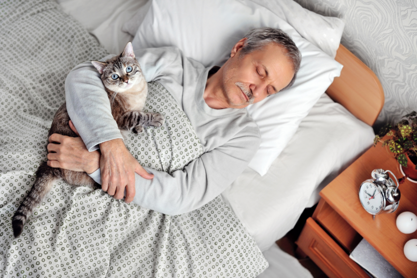 an old man sleeping with his blue-eyed cat