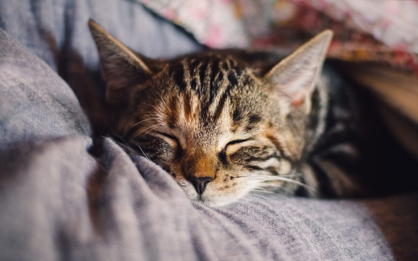 cat sleeping on the bed beside his owner's head