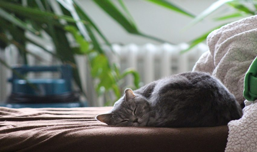 cat sleeping in a sofa bed