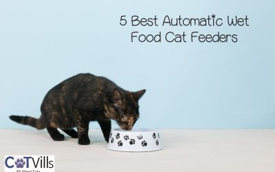 5 Best Automatic Wet Food Cat Feeders (2021 Review)