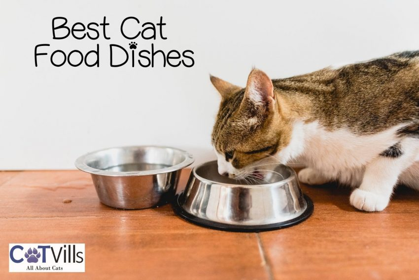 a cat eating using the best cat food dishes and bowl