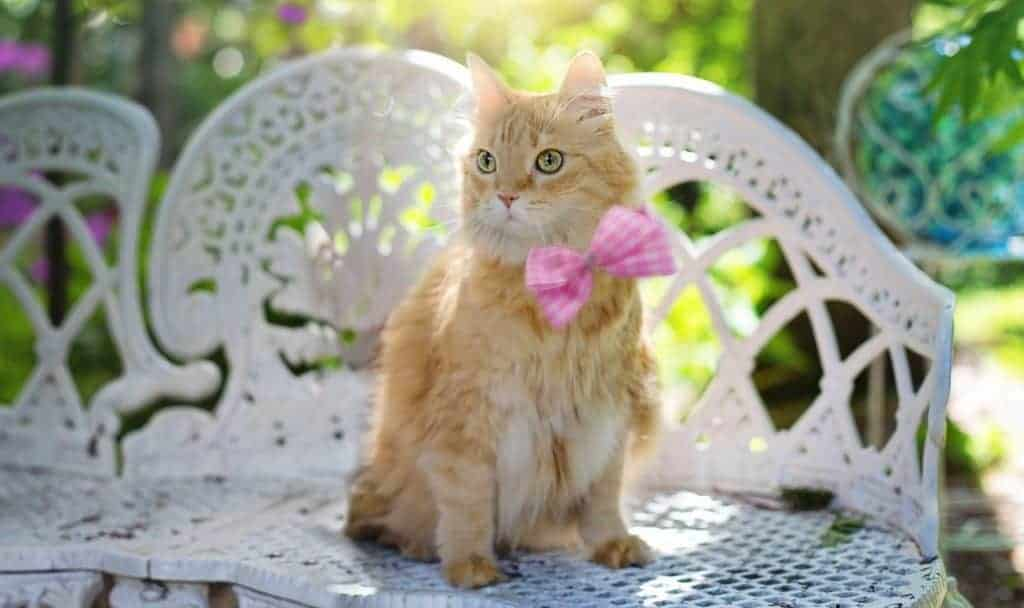Buff-Colored Cat Names: 100 Incredible Ideas for Males & Females