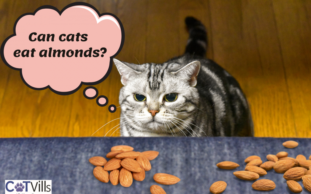 Is it Safe to Give Your Cat Almonds as a Treat?