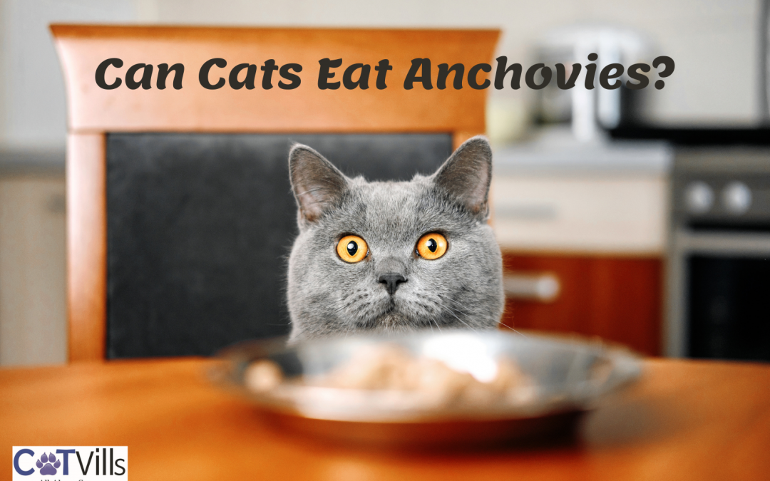 7 Beneficial Reasons to Feed Anchovies to Cats