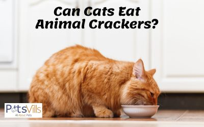 Are Animal Crackers Good or Bad for Your Cat?