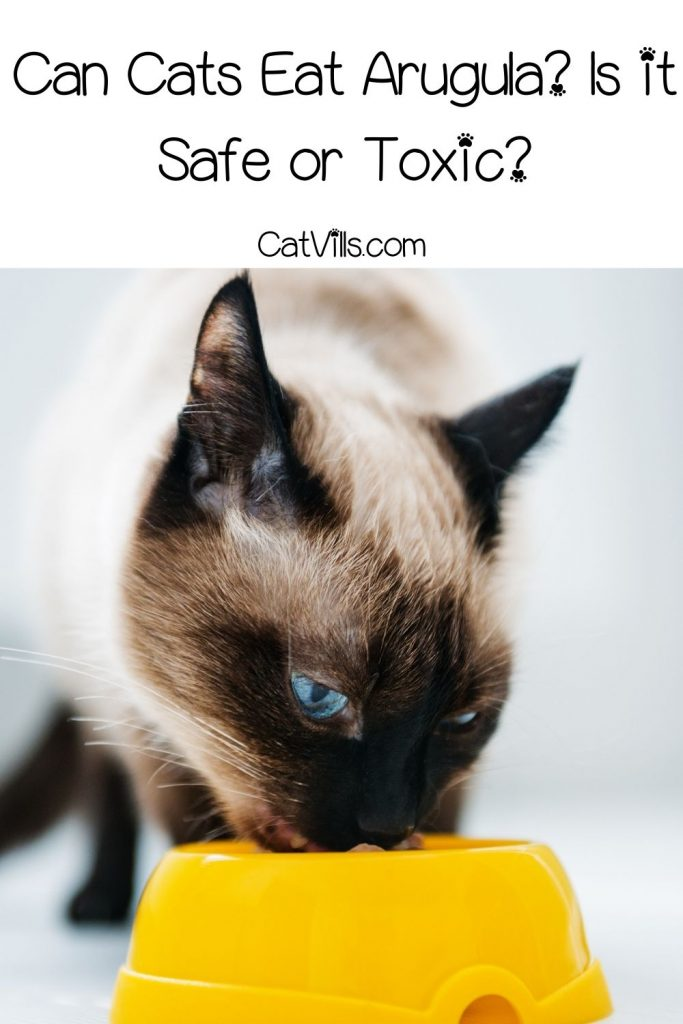 persian cat eating on an orange bowl