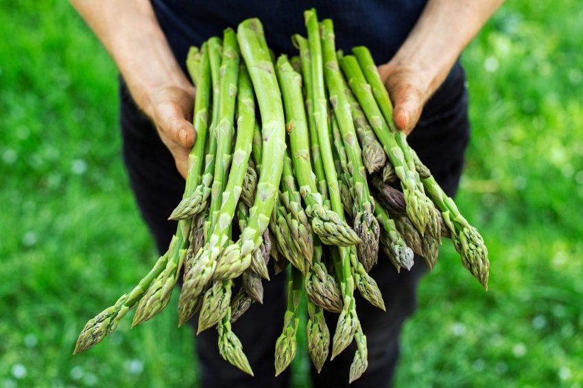newly harvested asparagus