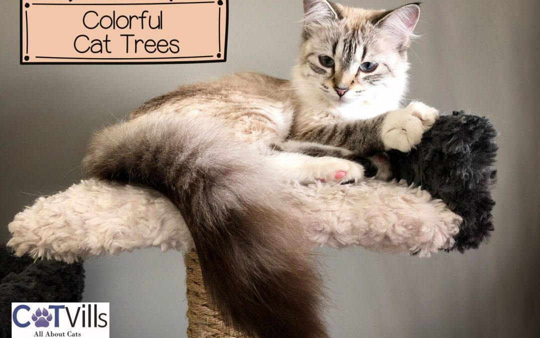5 Best Colorful Cat Trees That Look Great in your home