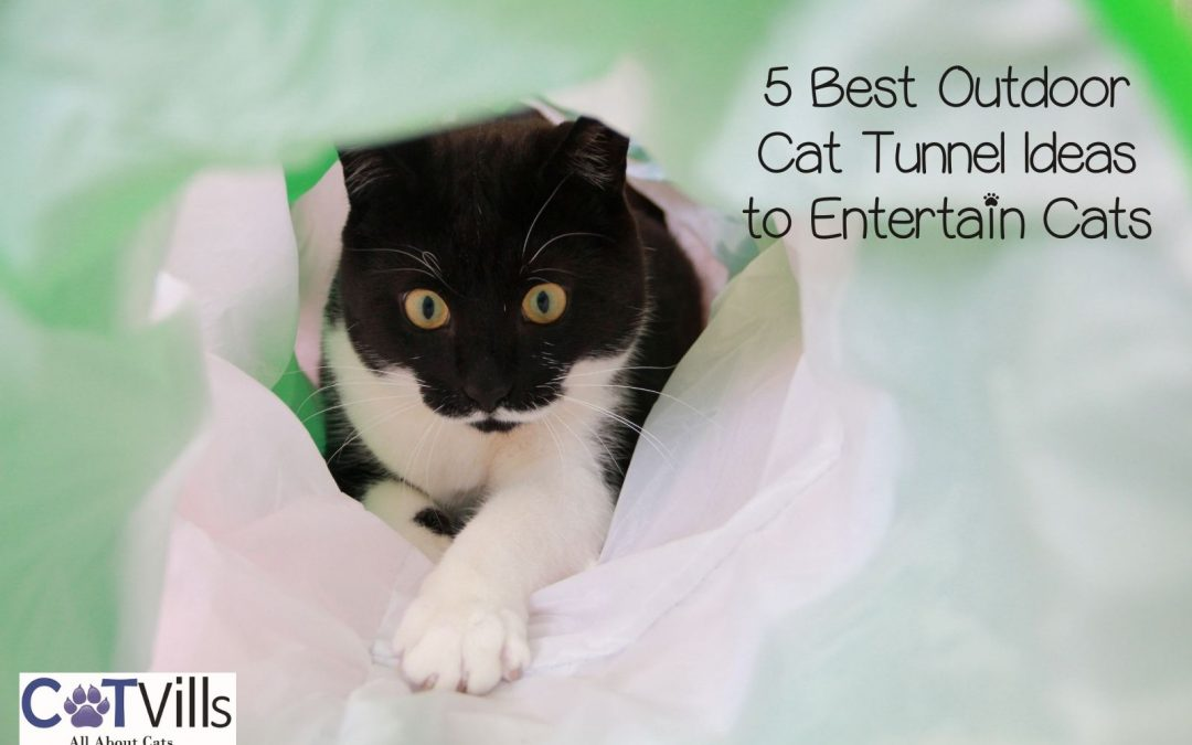 5 Best Outdoor Cat Tunnel Ideas to Keep Your Kitty Happy (2021)