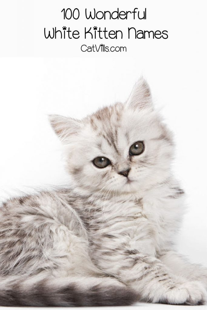 """Cute white cat with text """"white kitten names"""""""