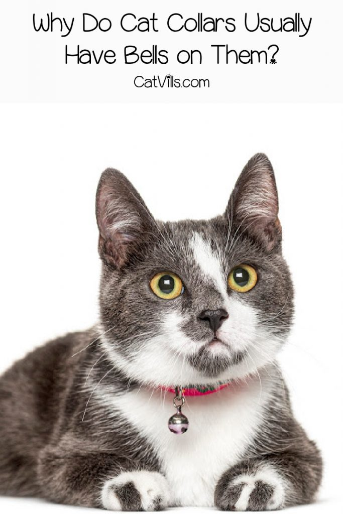 Grey cat with red collar with a bell hanging from it