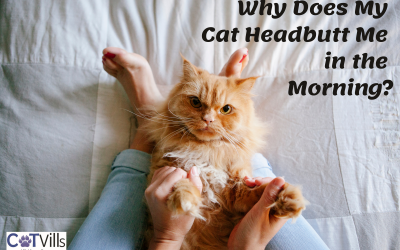 4 Reasons Why Your Cat Headbutts You in the Morning