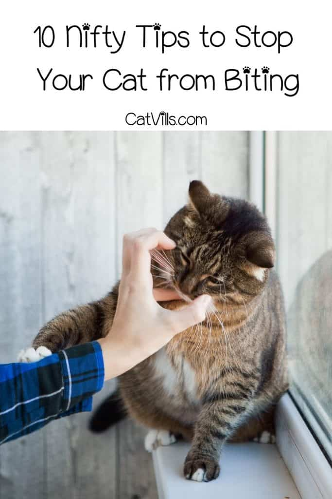 10 Nifty Tips to Stop Your Cat from Biting