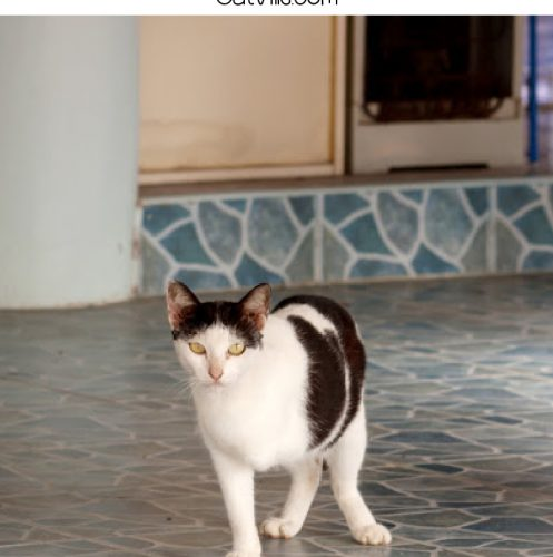 3-legged cat names text above a photo of a cat with three legs