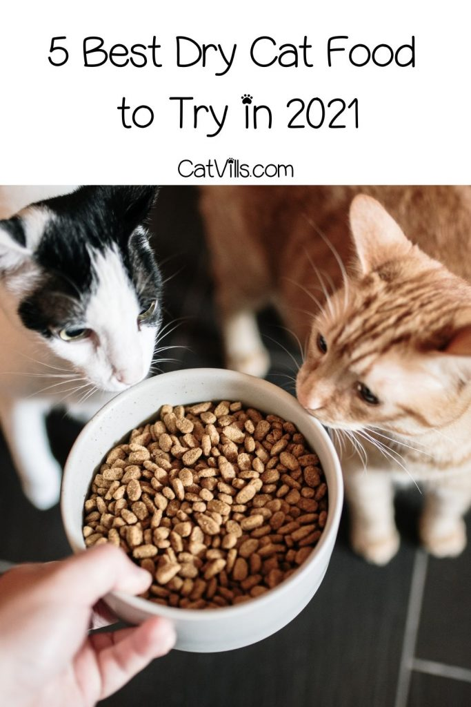 a hand giving the best dry cat food to two cats