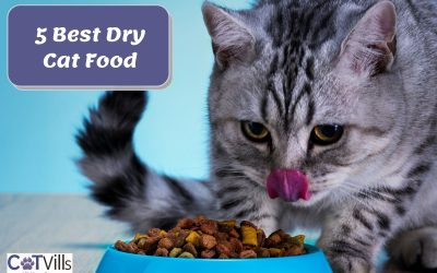 Top 5 Best Dry Cat Food in 2021 with Reviews