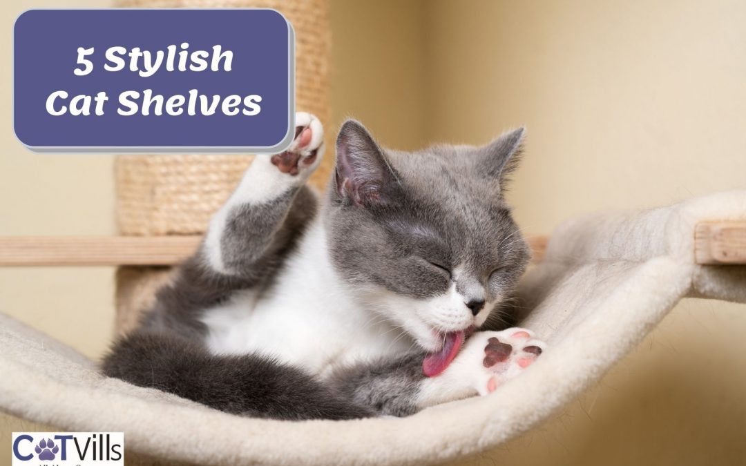 5 Stylish Cat Shelves for Your Kittie's Relaxation (2021)