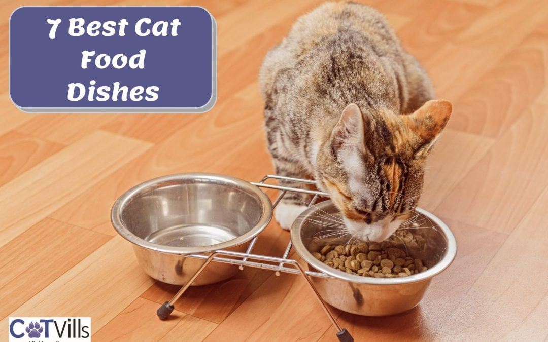 7 Best Cat Food Dishes & Bowls to Enjoy Meal Time