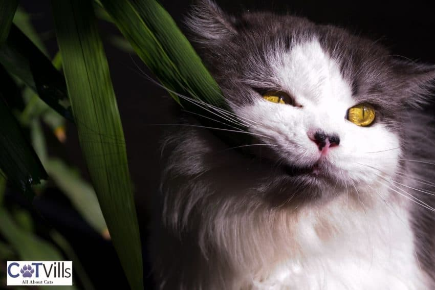 yellow-eyed cat eating a green leaf