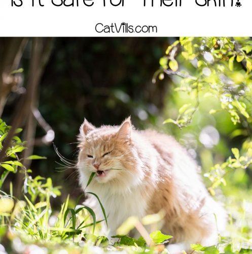 cat eating grasses in the garden