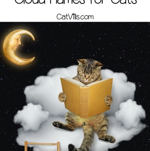tiger cat reading a book with 150 beautiful cloud names for cats